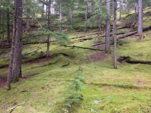 Green forest of southern BC