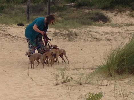 dog lady at camel beach.JPG