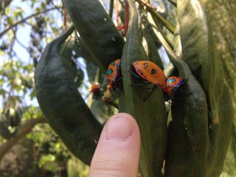 insects at nan tien.JPG