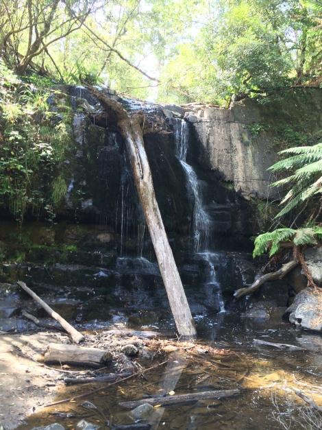 lilydale falls.jpg