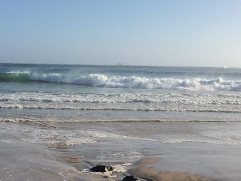 agnes water ocean.JPG