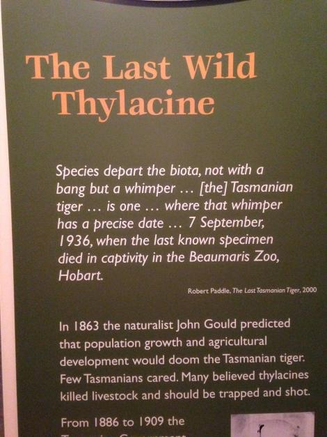 thylacine .jpg