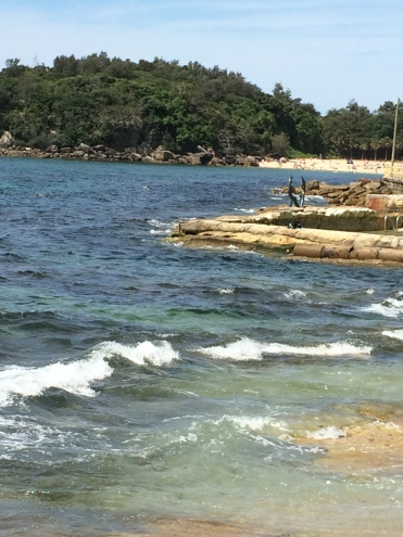 snorkeling at manly