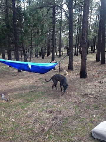 camping hammock.jpg