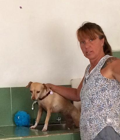 washing dog in cabina 1-.JPG