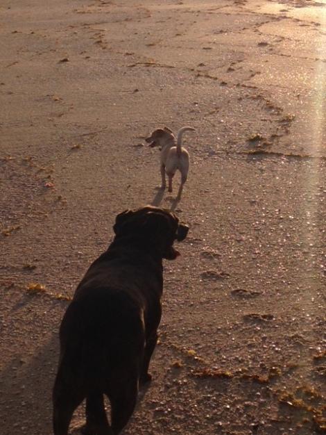 Zeb mango beach walk-.JPG