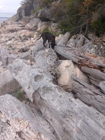 17 dogs giant driftwood.jpg