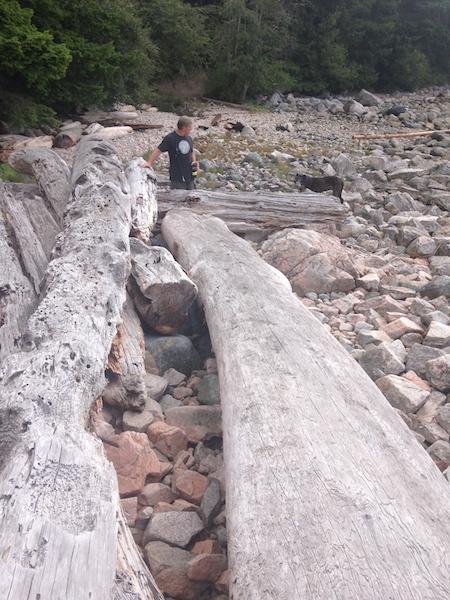 19 seri giant driftwood.jpg