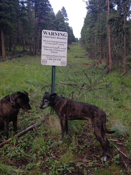 canada Dogs at border.jpg