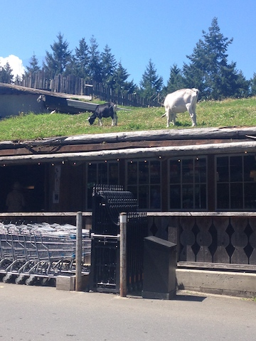 coombs goats on roof.jpg