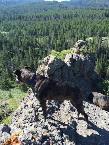 seri at teton rock outcropping.jpg