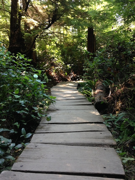 cape flattery board walk.jpg