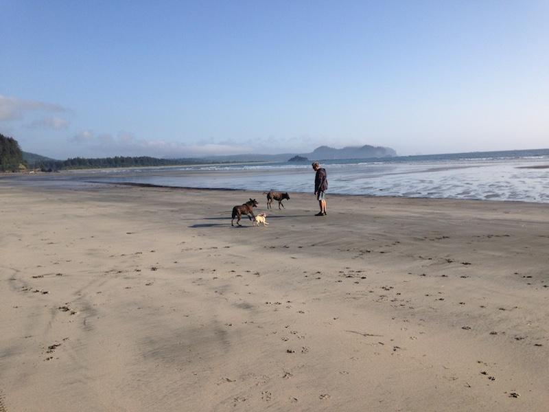 neah bay dogs on beach.JPG