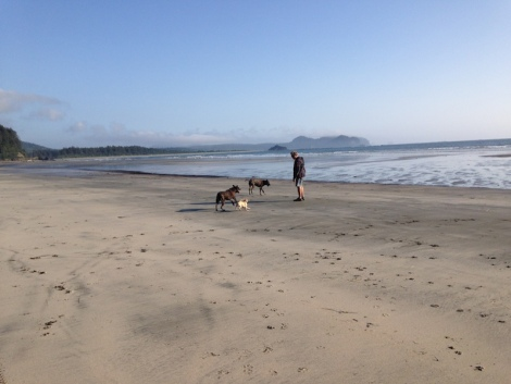 neah bay dogs on beach.JPG
