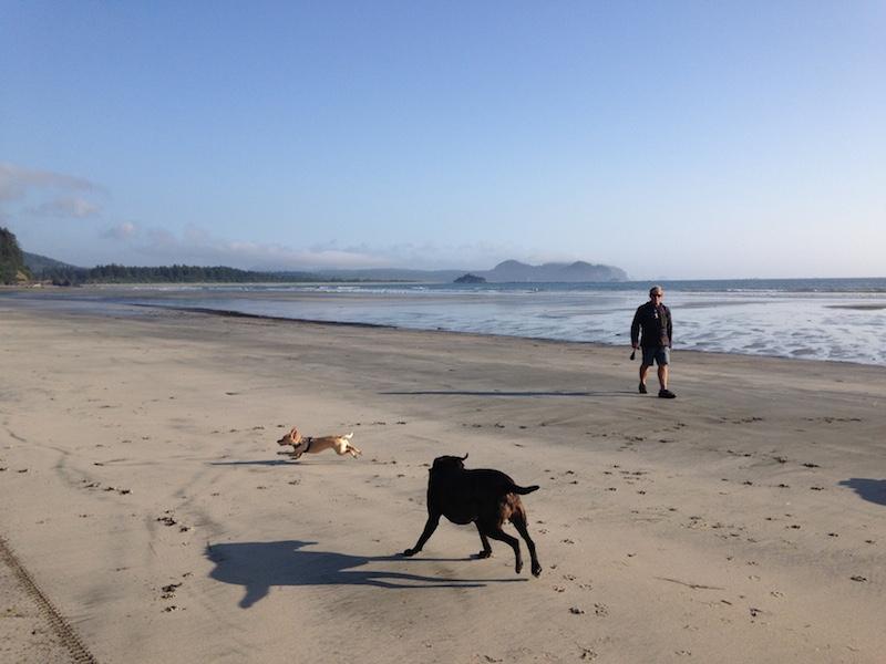 neah bay dogs on beach1.JPG