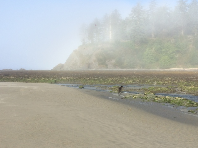neah bay foggy1.JPG