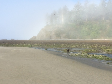 neah bay foggy1.JPG