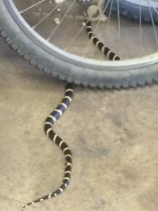 snake-in-the-workshop