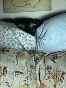 seri-on-the-pillows
