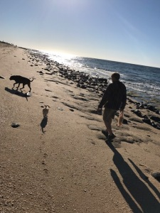 walking the beach with dogs
