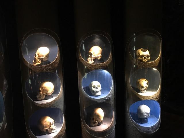 heads in museum.JPG
