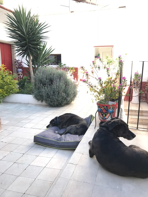 dogs hanging out in garden.JPG