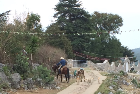 horse towing a donkey and three dogs