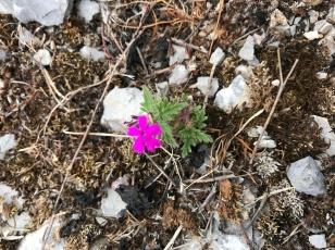 tiny flower.JPG