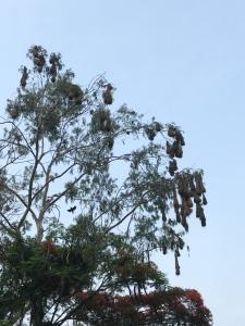 birds and birdnests