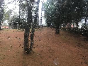 rain daily