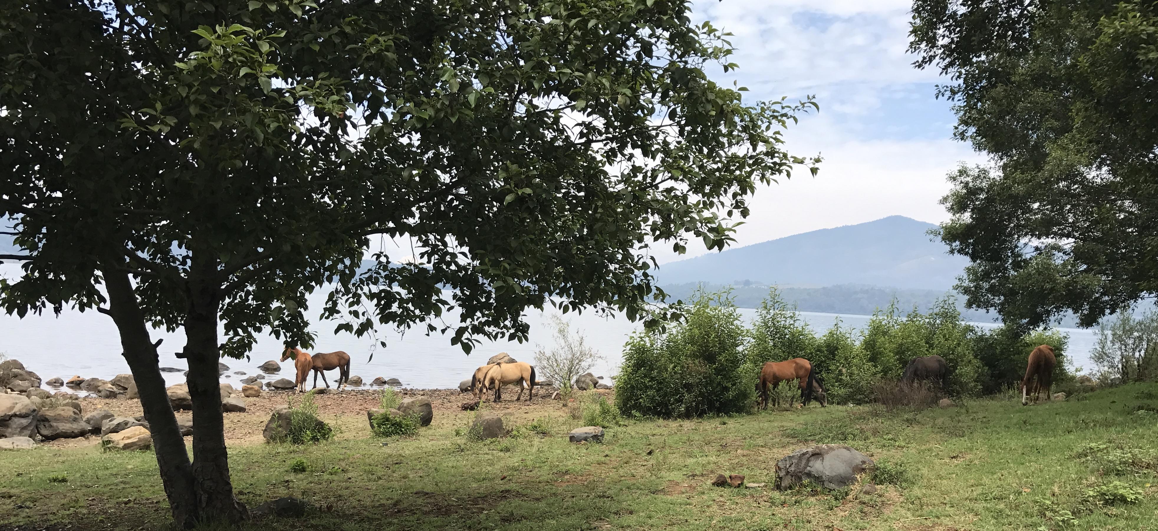 zarahuen horses..JPG