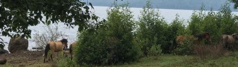 zarahuen lake view..JPG