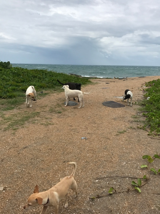 beachfront dog meeting.jpg