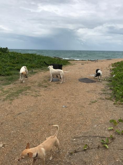 beachfront dog meeting.jpg
