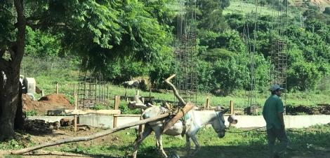 village street donkey.JPG