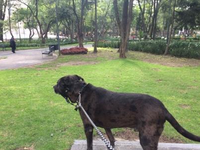 zeb in the park