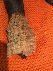 iguana skin on zebs foot.