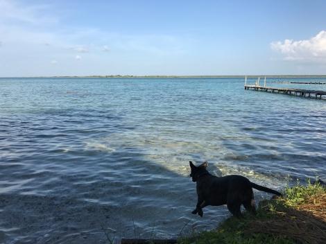 zeb bacalar swim jump