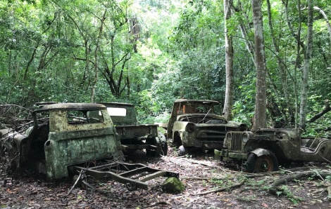 abandoned cars.JPG