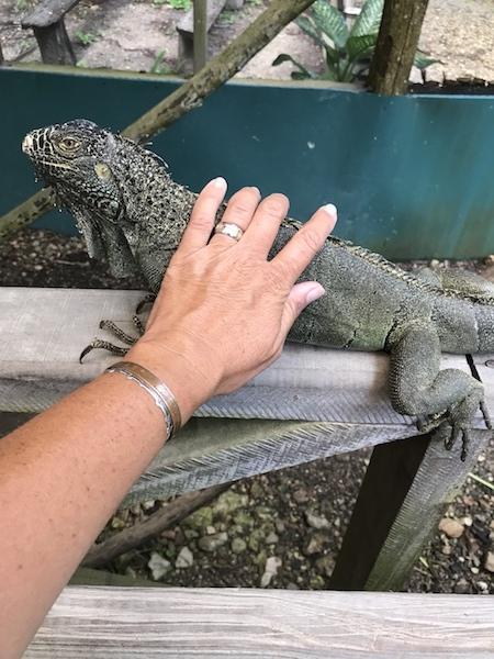 iguana petting.jpg
