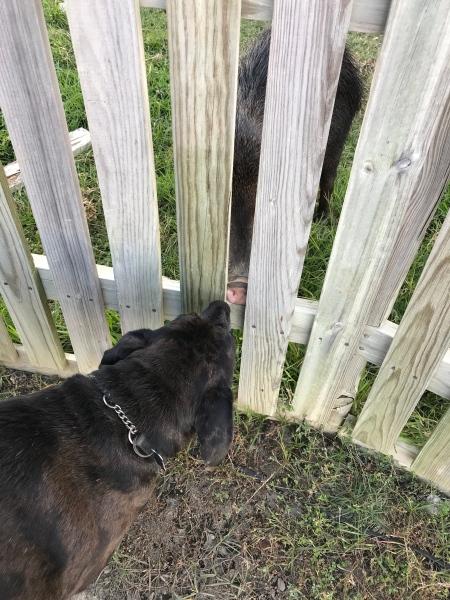 zeb meets peccary