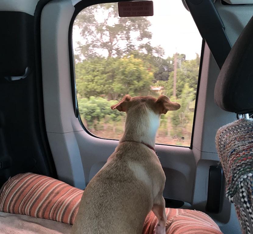 mango looking out window.JPG