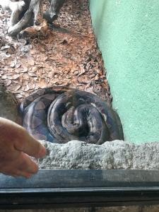 museum snake