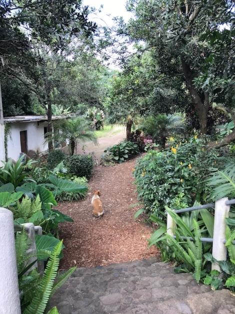 macadamia farm.jpg