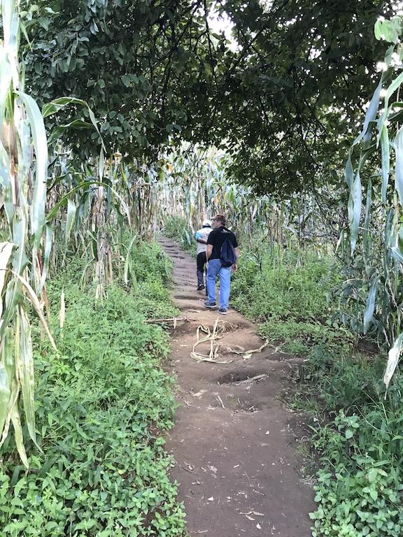 trail through corn