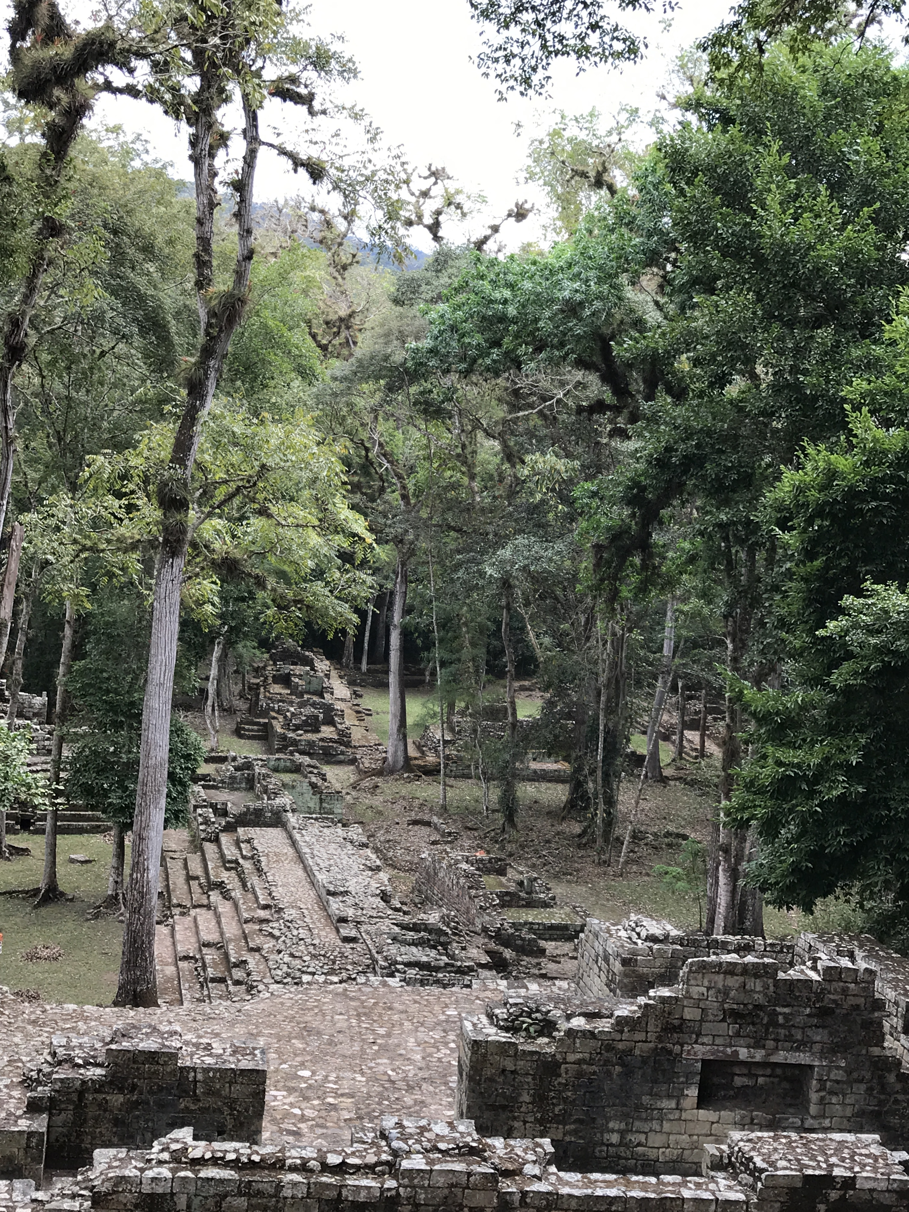 Copan jungle