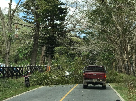 ocotal highway blocked by tree