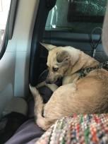 first truck ride1