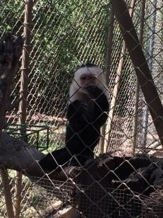 animal rescue center monkey