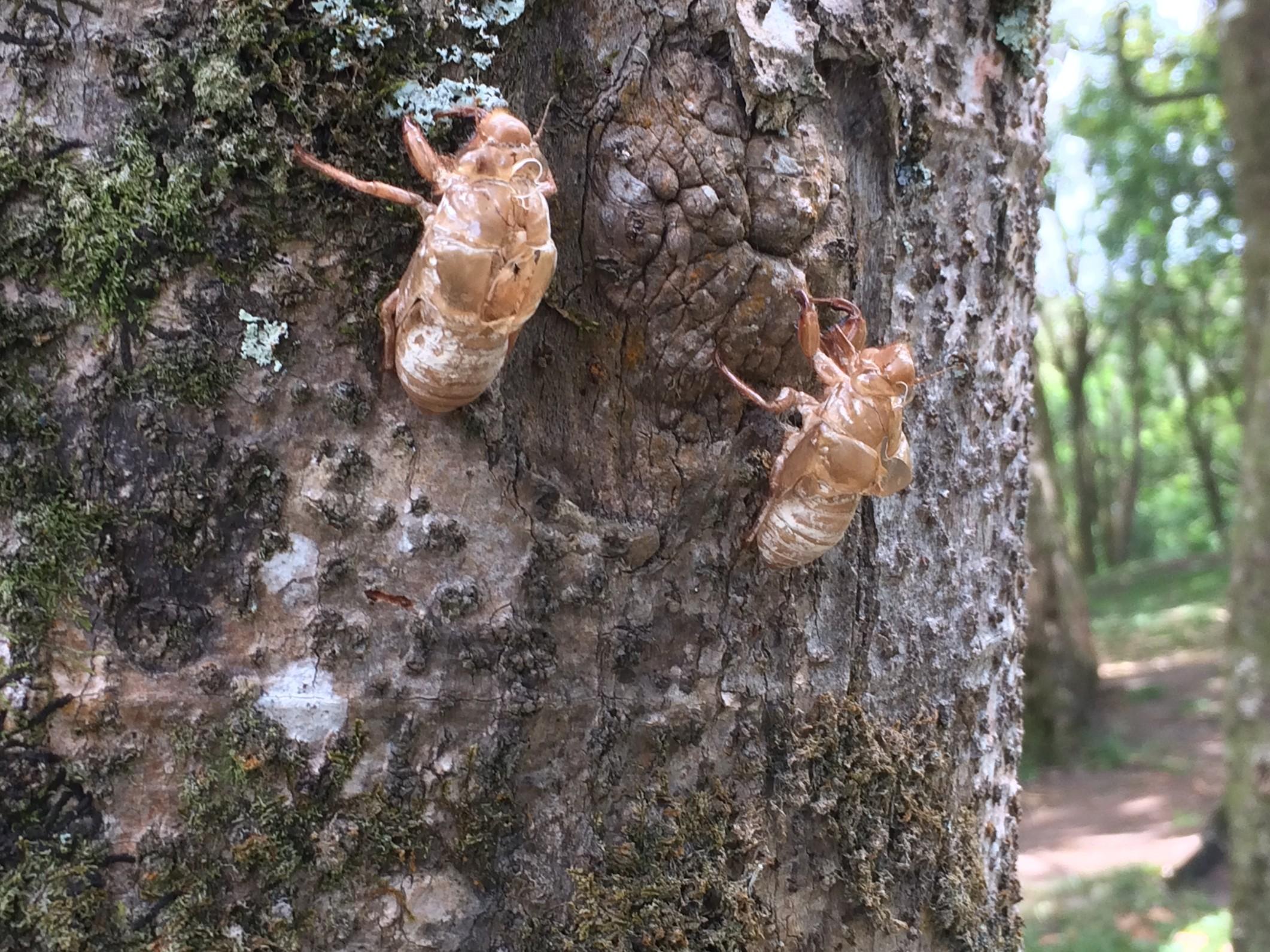 bug larvae.jpg